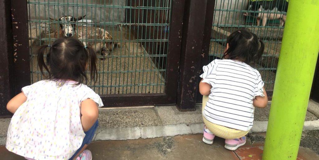 上千葉砂原公園の動物たち