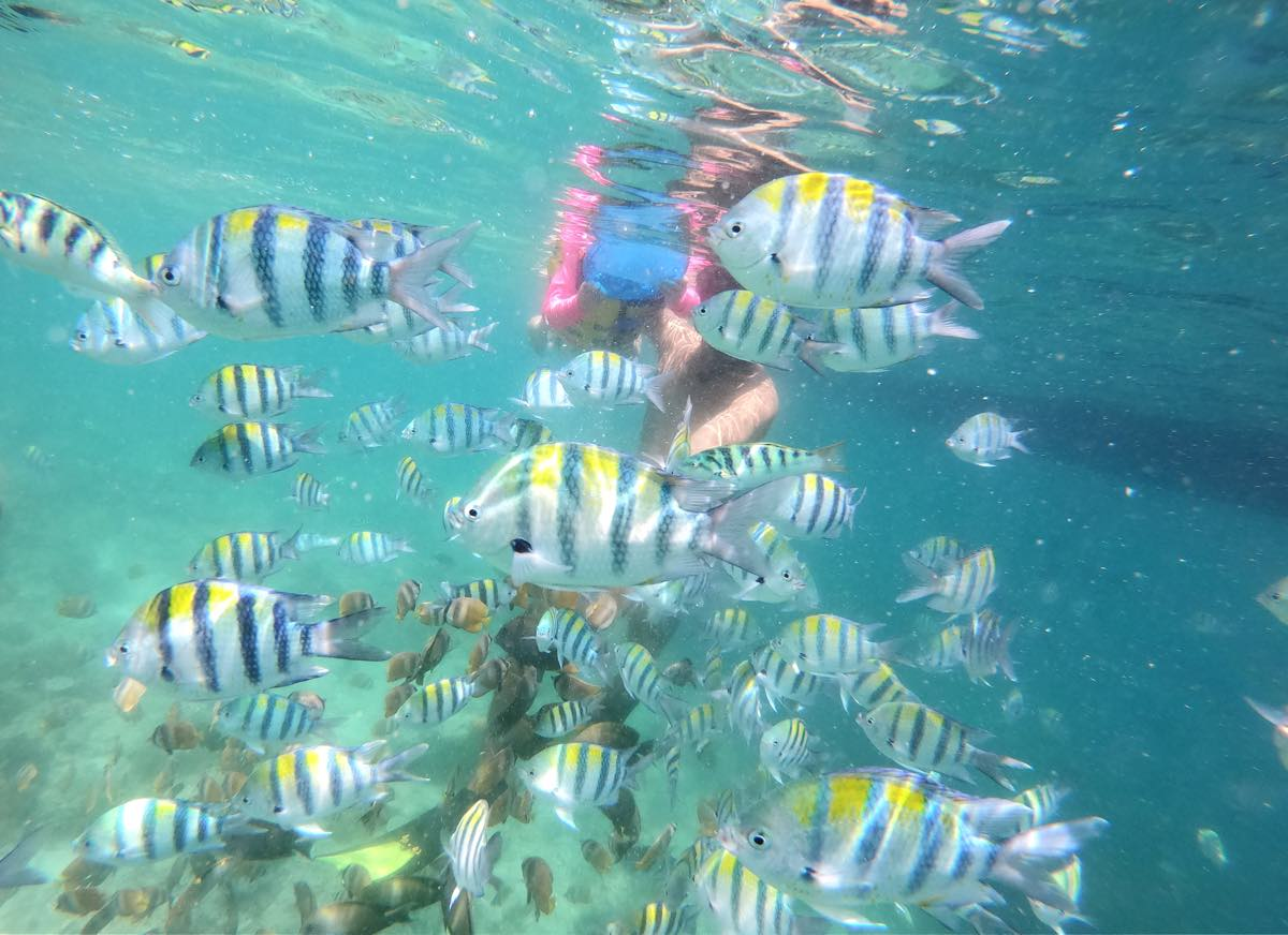 ギリ島の魚