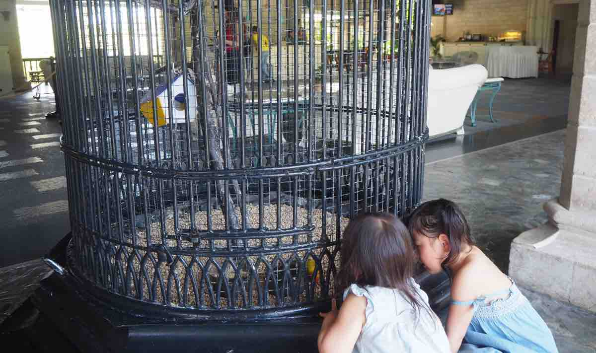 プランテーションベイのフロントにいる鳥を見る子供達