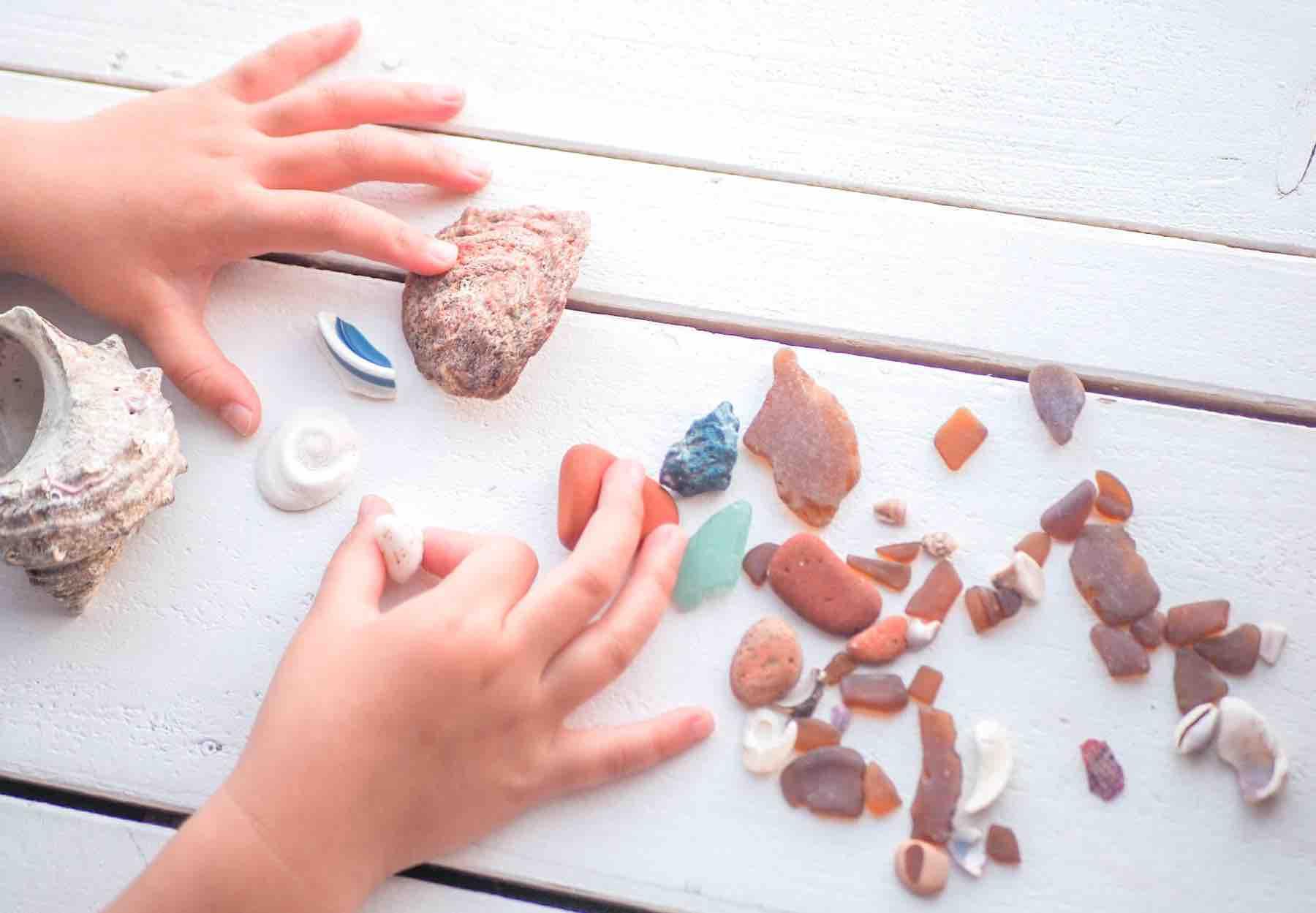 葉山の海岸で見つけた貝殻